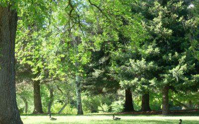 Layton Park | Layton, UT